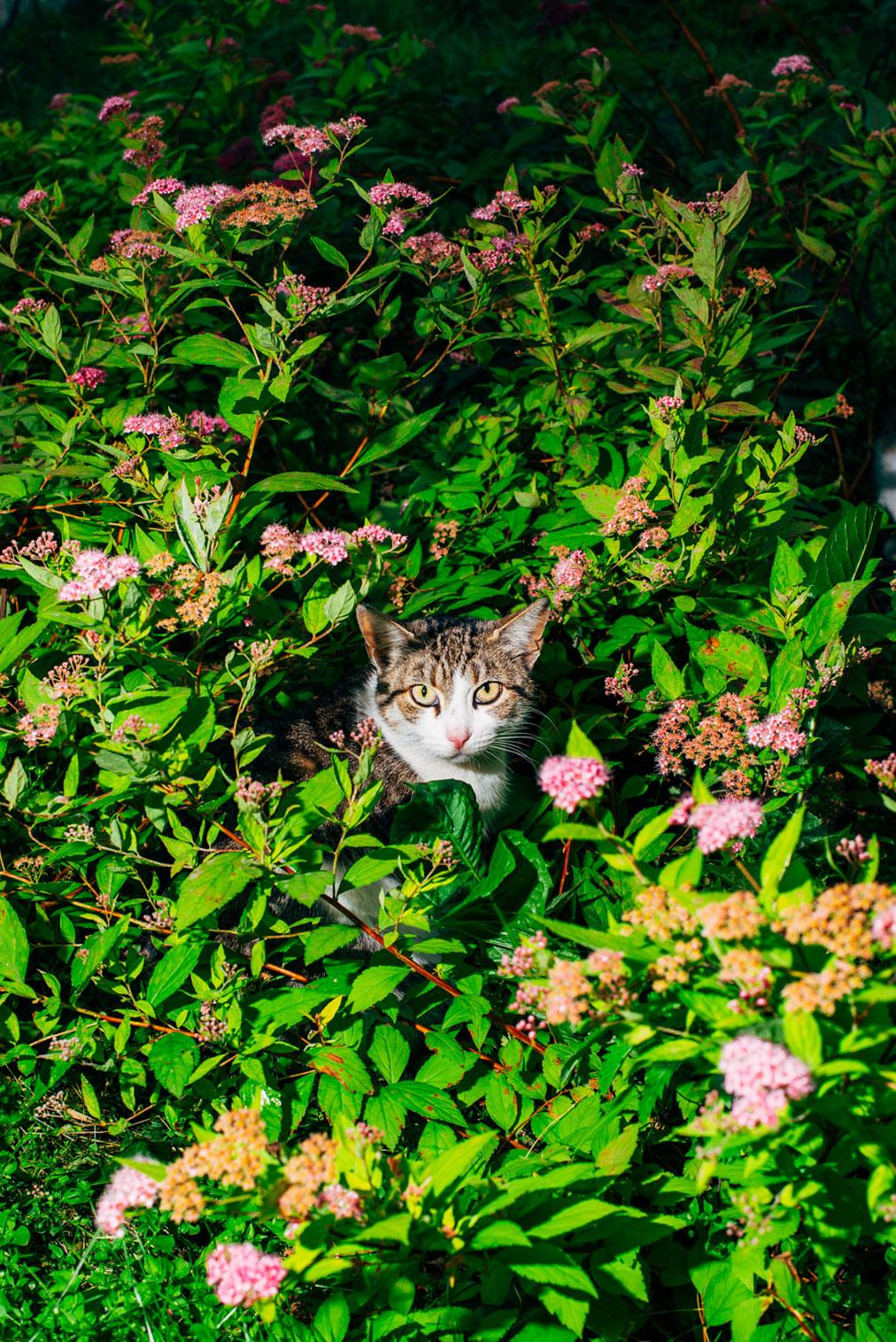 Nikita Teryoshin - Backyard Diaries